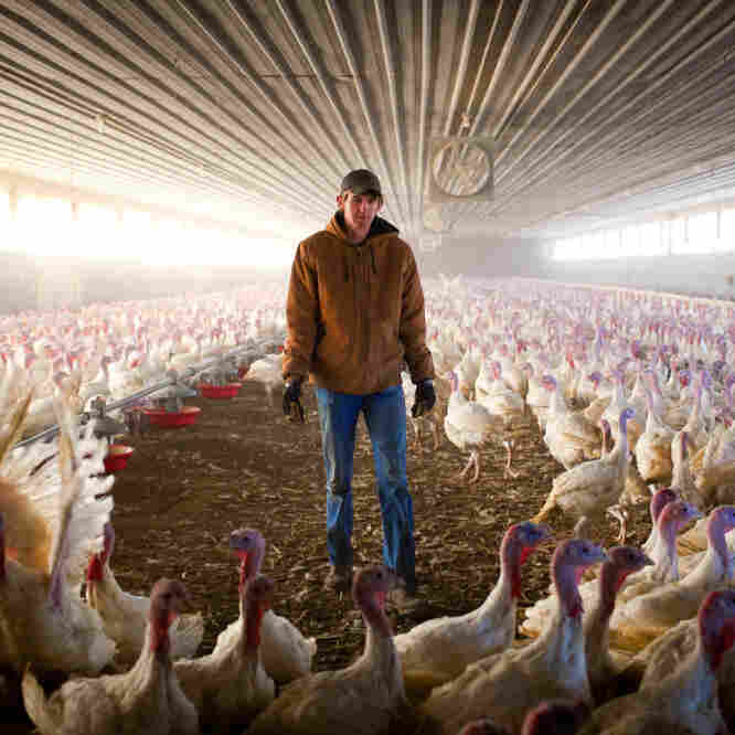 A Wild Goose Chase To Find Turkey Farmers