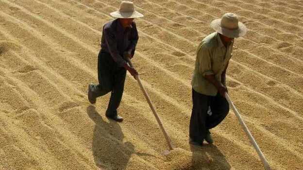 Soybean farmers in Xiangfan, in central China's Hubei province. (Reuters /Landov)