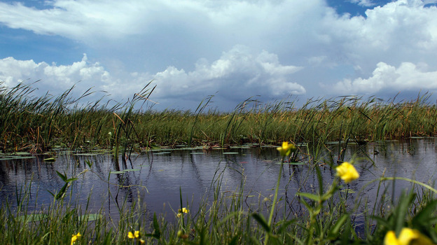 Florida Gov. Rick Scott says his administration will focus on restoring the Everglades. There are skeptics, however, because Scott oversaw cuts to restoration programs in his first year in office. (Getty Images)