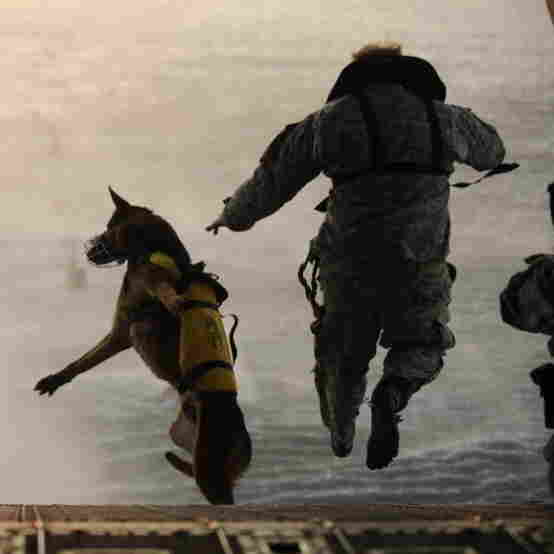 Some Combat Dogs Suffer Post-Traumatic Stress, Too