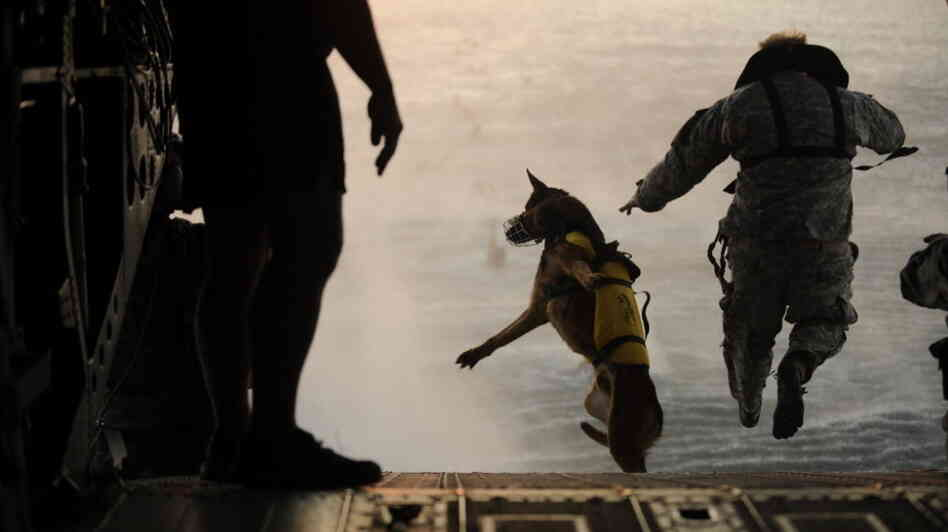 A U.S. Army soldier with the 10th Special Forces Group and his military working dog jump off the ramp of a CH-47 Chinook