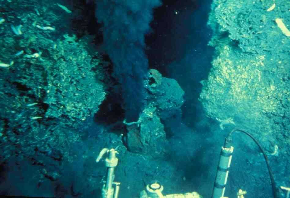 Crane and her team were the first humans to see undersea vents. The vents, which pump hot water and chemicals like hydrogen sulfide into the sea, warmed the nearby waters to spalike temperatures.