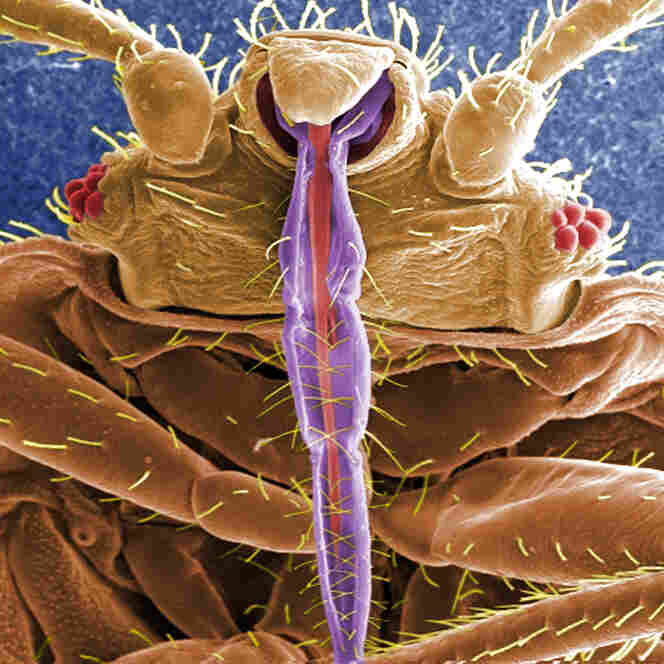 Bedbug Infestations Are A Family Affair