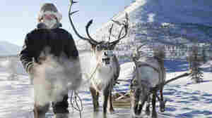 Russia's Real Reindeer Culture