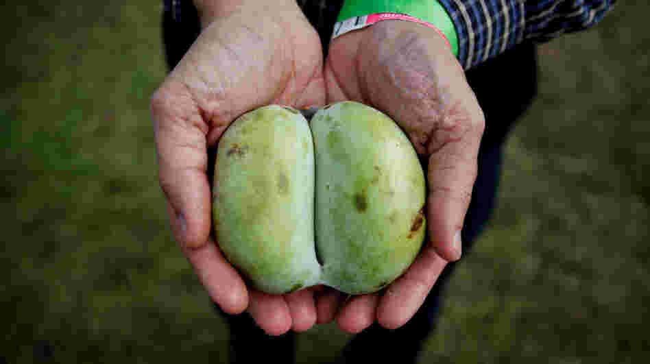 This year saw more people interested in foraging for fruit like the pawpaw, which looks like a mango, but is native to North America.
