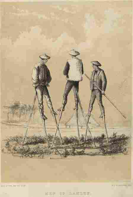 An illustration, circa 1800, shows men in Landes, France, walking on stilts to protect their feet from the marshy ground.