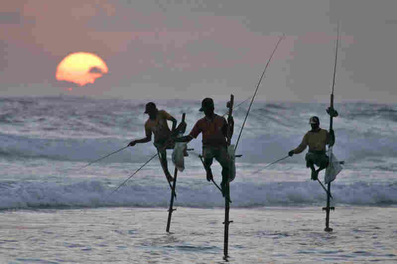 Fishermen use stilts to fish off the coast of Koggala, Sri Lanka.