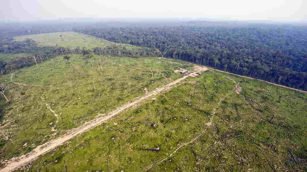 The world's forests act as massive sponges, sucking carbon from the atmosphere. Above, an aerial photo from 2009 shows massive deforestation in the Brazilian state of Para.