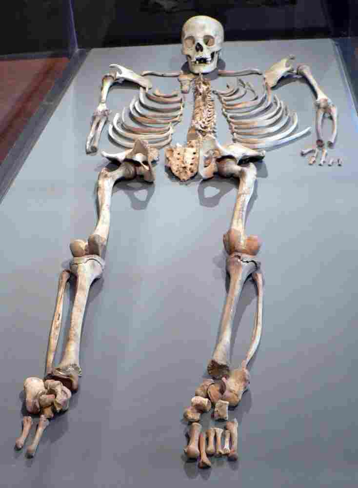 This human skeleton is among the objects that Yale has returned to Peru.