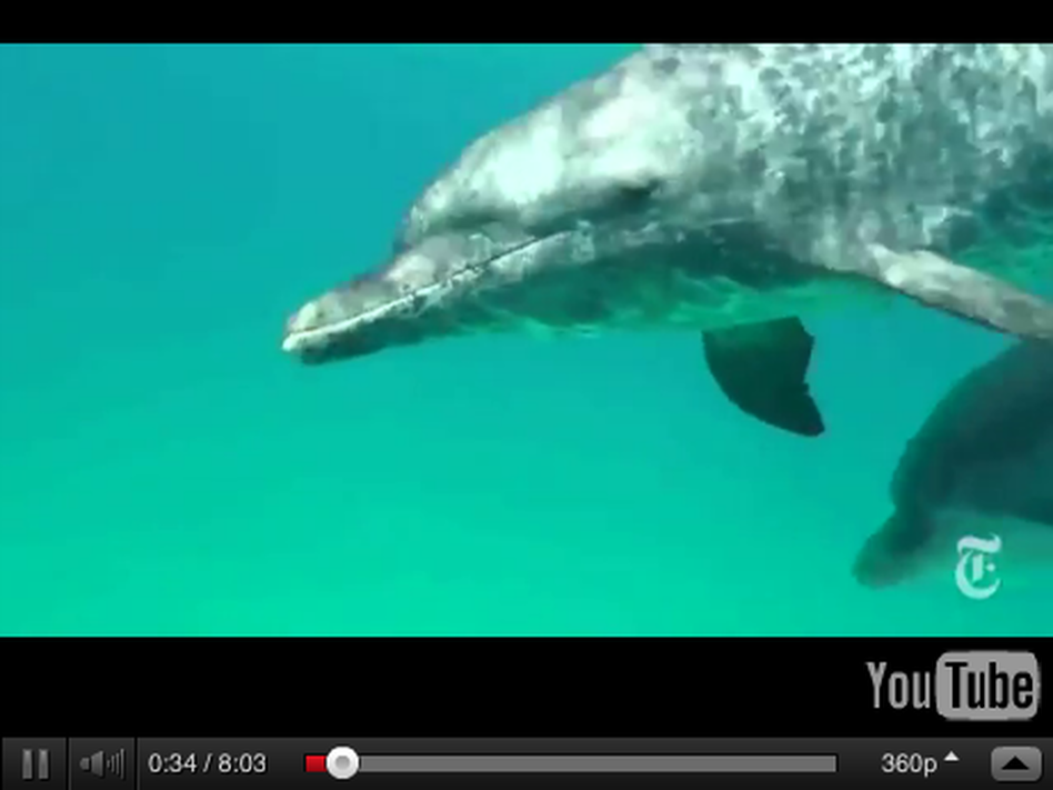A screen grab from The Wild Dolphin Project