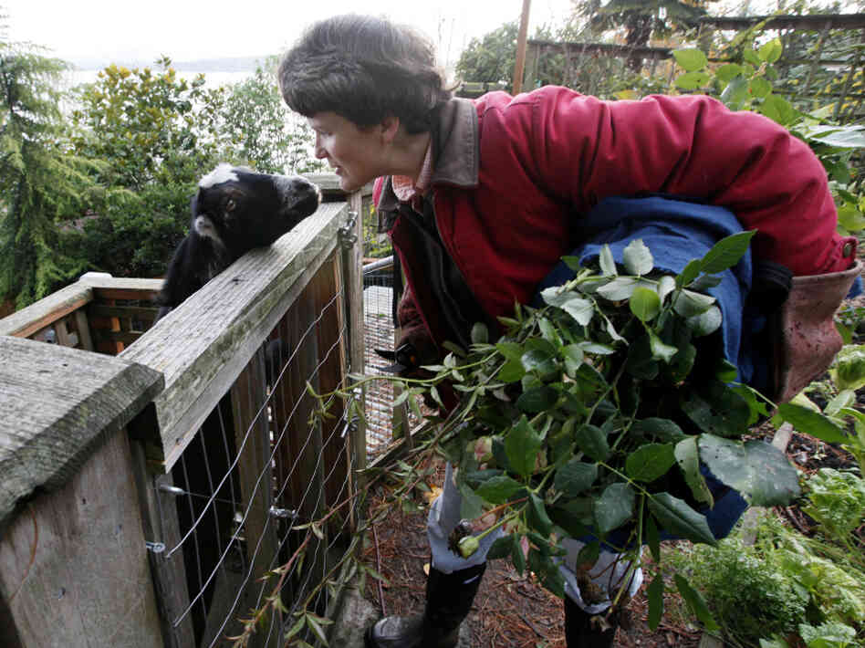 Jennie Grant greets her goat Eloise in Seattle. No stranger to urban farming, Grant already had chickens, bees, and a large vegetable garden before she added goats to her lineup.