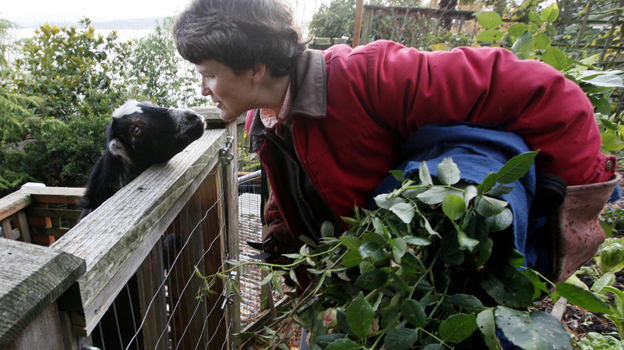 Jennie Grant greets her goat Eloise in Seattle. No stranger to urban farming, Grant already had chickens, bees, and a large vegetable garden before she added goats to her lineup. (AP)