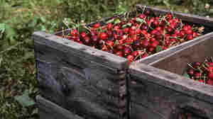 The Washington State Fruit Commission received $100,000 in federal money to promote cherries in Indonesia, but Sen. Tom Coburn says this is a waste of taxpayer money.