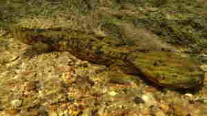 Zoo Crafts Love Nest To Save Ozark's Salamanders