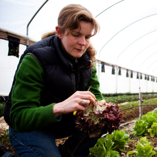 Georgia O'Neal harvests winter greens at the Tree and Leaf Farm in Unionville, Va., on March 16, 2011.