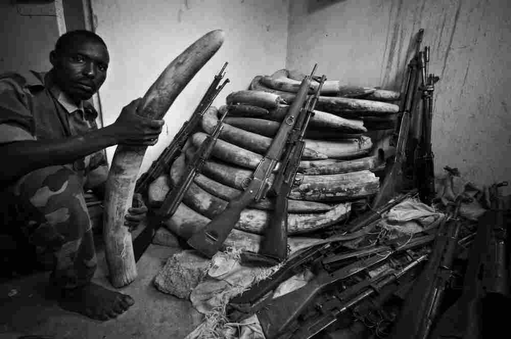 A storage area for confiscated ivory at Zakouma National Park, in 2006.