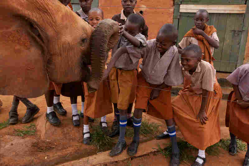"Mzima the elephant, a poaching victim, greets schoolchildren visiting Tsavo National Park. ""To poachers,"" says Daphne Sheldrick, ""elephants are just money and meat. But that is changing. The word is getting out to a younger generation."""