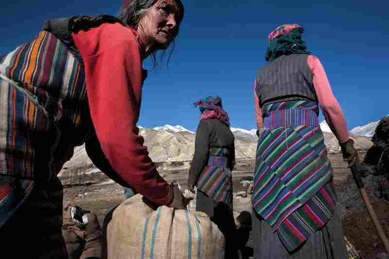 Residents of the village of Phewa collect fertilizer into bags to be taken to the fields. Mustang has a very short growing season and it is common for women and men to work together to finish tasks quickly.