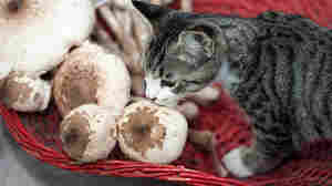 Mystery Solved: Why The Cat Craves Mushrooms (And People Do, Too)
