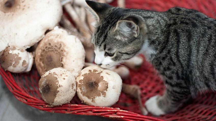 Cat - mushroom - Gollum - Fantasy & Abstract Background Wallpapers ...