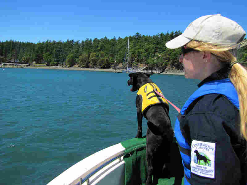 Trainer Liz Seely looks on as Tucker takes to the bow and sniffs the waves.