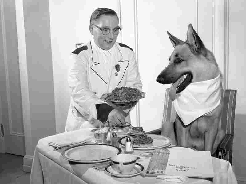 By the 1950s, Rin Tin Tin was played by three dogs, who often traveled around the country making public appearances. In this undated photo, one Rin Tin Tin enjoys a luxury dinner in his Chicago hotel suite.