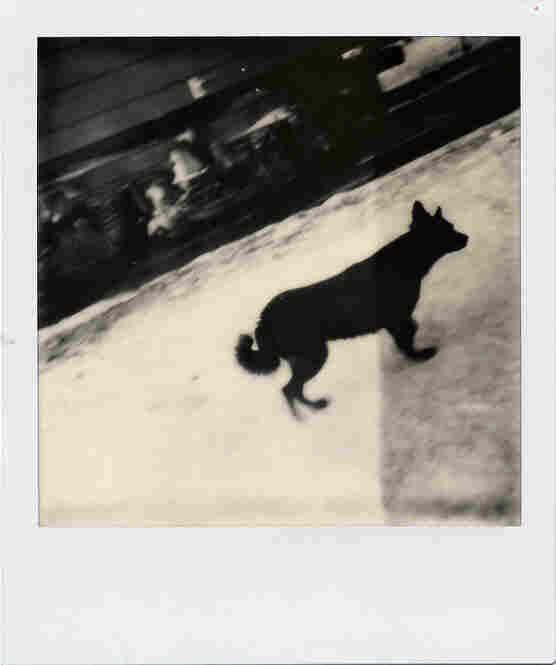 station dog