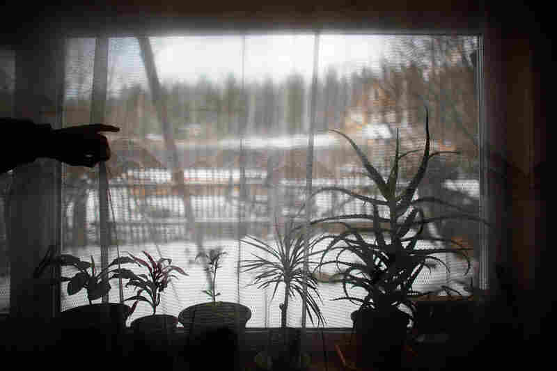 Made up of dilapidated wooden houses set along snow-covered dirt streets, Sagra lies near Russia's Ural Mountains, the natural border between Europe and Asia. Sagra is not far from the Siberian city of Yekaterinburg. Here, plants stay warm inside, despite subzero temperatures outside.