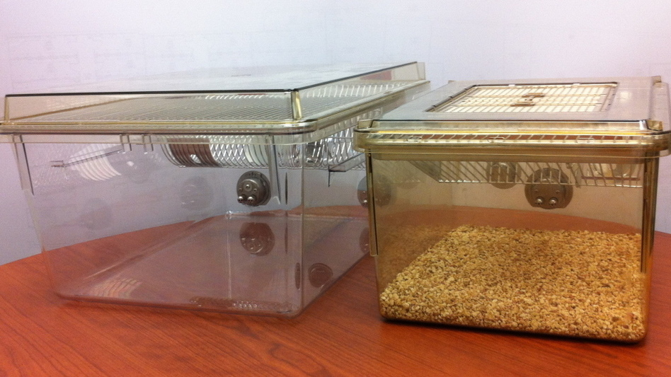 The standard rat cage used in the U.S. (right) has 140 square inches of floor space. One interpretation of the new guidelines says this cage wouldn't be big enough to hold a male rat, a female rat and their babies. Instead, labs would have to house the rat family in a larger cage, like the 210-square-inch one on the left. (Biomedical Resource Center, Medical College of Wisconsin)