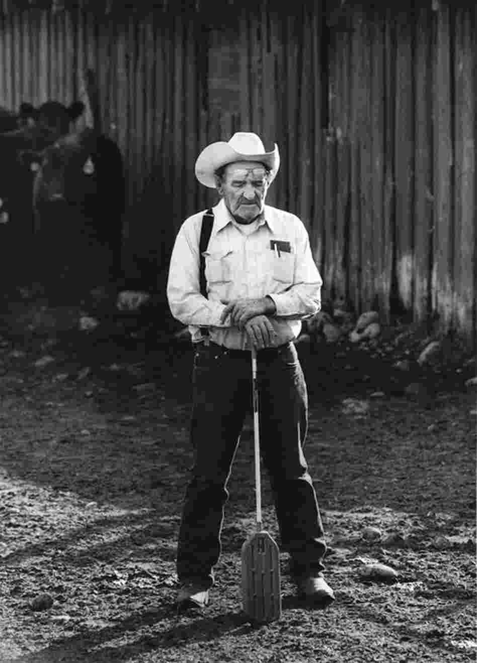 Cattle Broker, Yampa, Colo., 2009