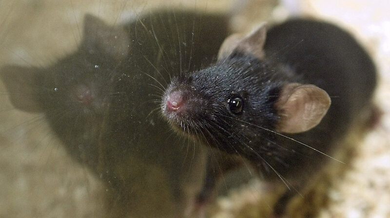 Labs Size Up New Guidelines For Rodent Cages : NPR