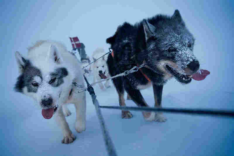 Setting out in the middle of winter, a dogsled team patrols northeastern Greenland.