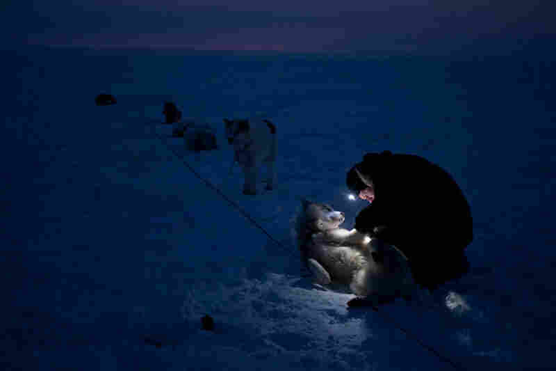 As a cold dusk settles over the camp, patroller Jesper Olsen inspects the dogs one by one for any injuries they might have sustained after pulling the sled across packed snow and ice for six hours.