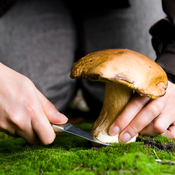 The Shroom With A View: Mushrooms are fleshy, spore-bearing fruiting bodies found all over the world. They can grow in practically any environment with moisture.