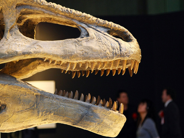 "Sometimes the fossil record comes with teeth: Mapusaurus roseae on display in the ""Dinosaurs of Gondwana"" exhibit in 2009 at the National Museum of Nature and Science in Tokyo. (Getty Images)"