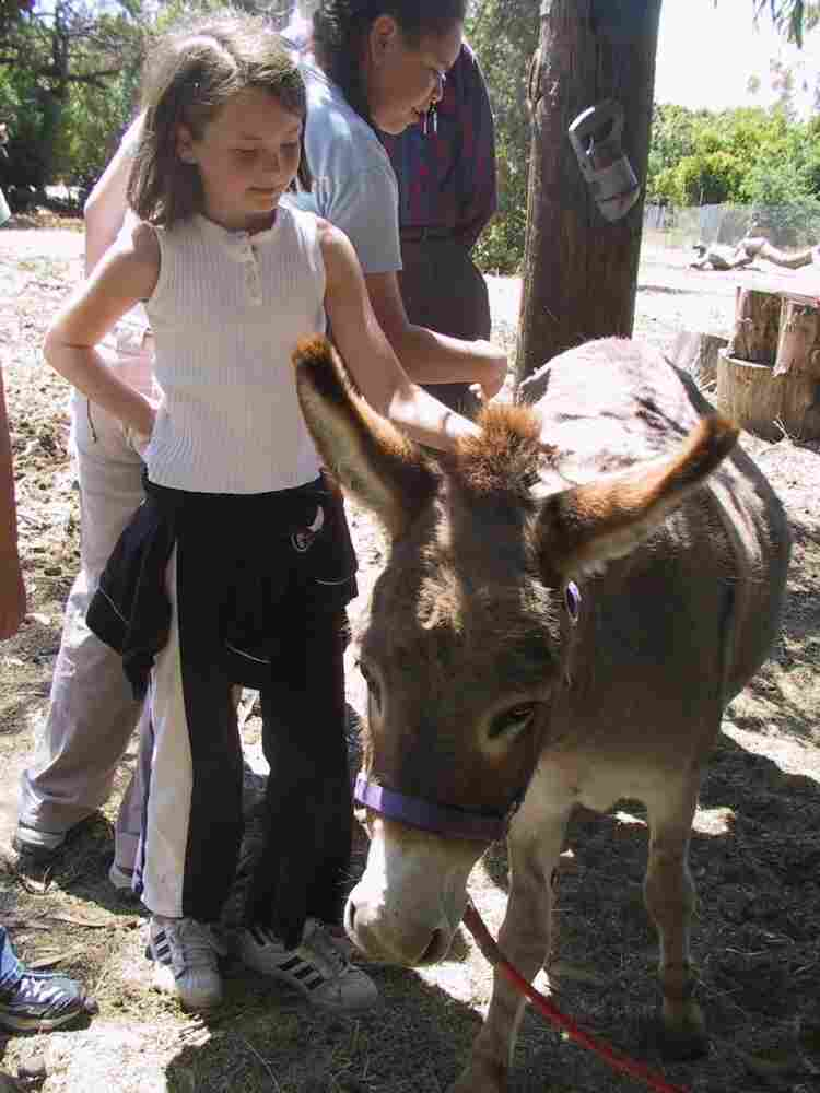 Two donkeys, cared for by the community, live on Witt's property. The donkeys attract daily visits from children, in part because one of the animals was the model for the Donkey character in the Shrek movies.