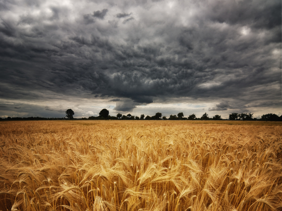 Altering the upper atmosphere could block enough sunlight to offset the warming effects of climate change and protect food crops. But what are the risks? (iStockphoto)