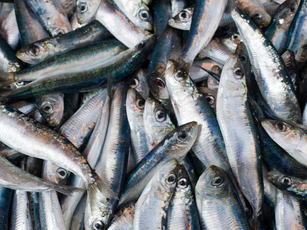 Sustainably caught fish are no longer found just at fancy fishmongers. (iStockPhoto.com)