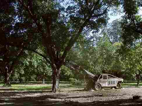 A machine shakes pecans from a tree near Albany, Ga., in 2001. Pecan prices have soared to record highs in 2012, driven by withering drought in the U.S. and surging demand in Asia.