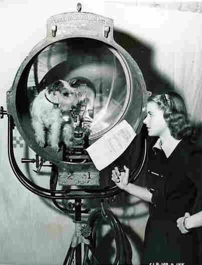 Ingrid Bergmann talks to her dog Buzzy on the set of Intermezzo.