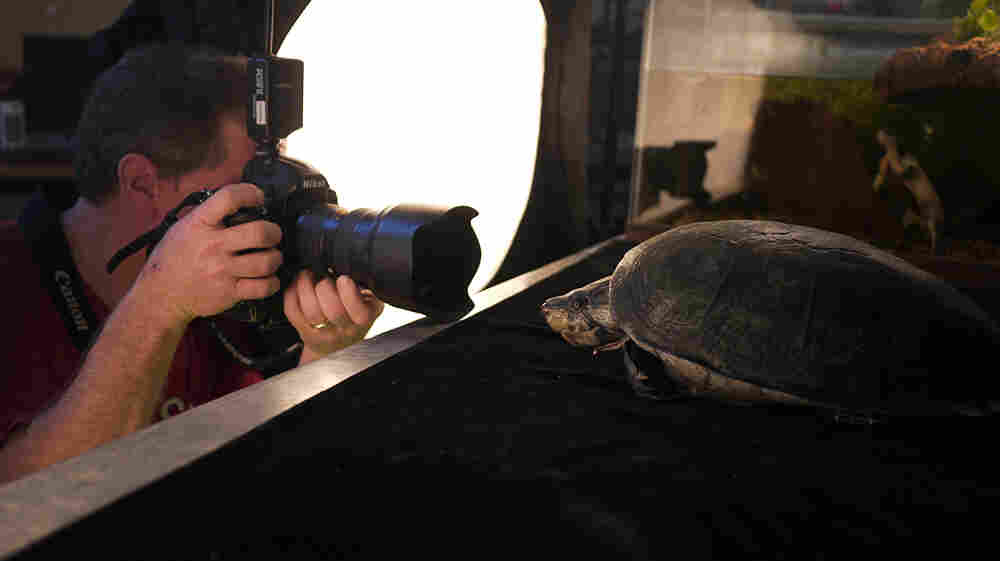 Photographer Joel Sartore captures a big-headed Amazon river turtle at the National Aquarium in Baltimore.