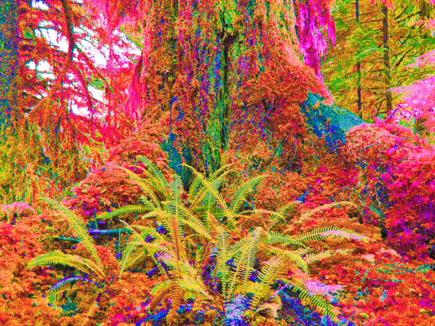 This could be your forest on psilocybin.
