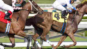 Luck, the new HBO drama created by David Milch, is about the inside world of horse racing.