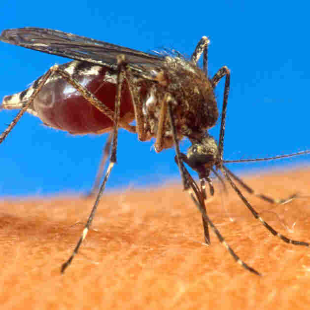 Dengue Fever Cases Surge Worldwide