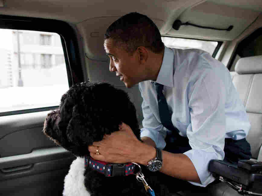 President Obama traveled in the presidential limo with his dog, Bo. Adviser David Axelrod tw