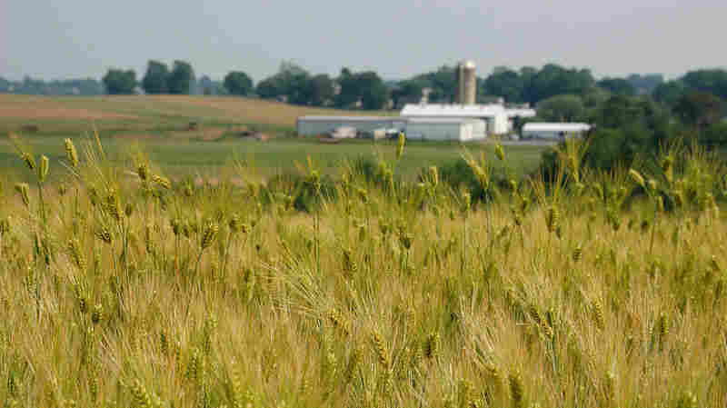 """America's amber waves of grain inspired teacher Katharine Lee Bates to write the poem later used in the song """"America the Beautiful."""""""