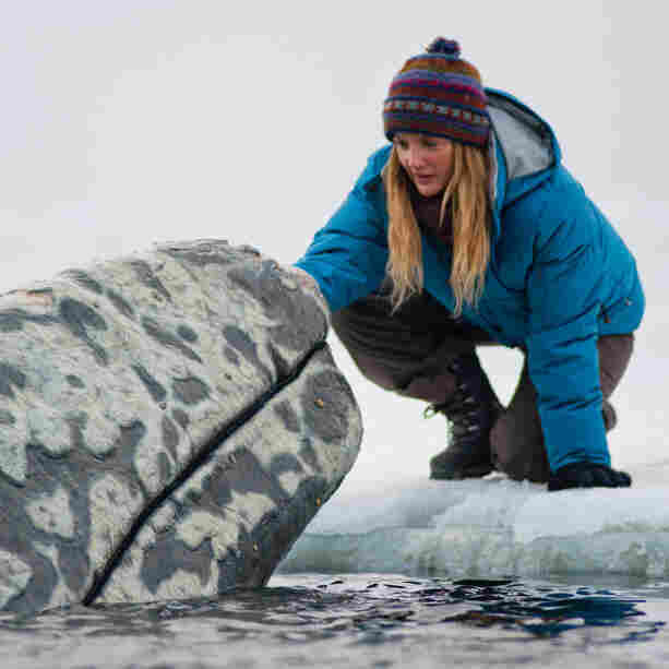 Arctic Heart-Warmer: Environmental activist Rachel Kramer (Drew Barrymore) reaches out to one of the whales blocked from migrating south in Big Miracle.