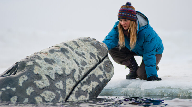 Big Miracle A Whale Tale As The Cold War Wanes