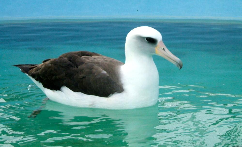 Sea-bird Driver