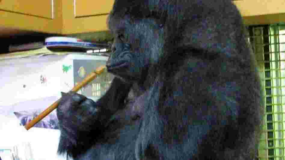 Koko with a recorder